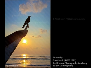 Bird on the boat - Preethaa R.