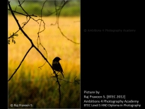 Bird on the branch - Raj Praveen S.