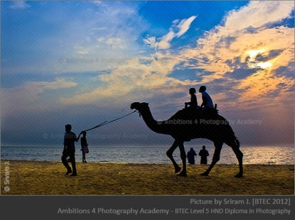 Camel ride - Sriram J.