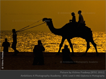 Camel ride - Vishnu Pradeep
