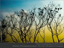 Flock - Sathiyaruban N.