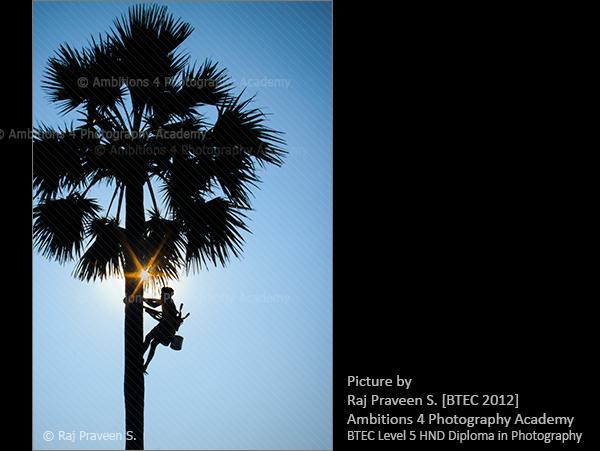 Palm tree climber - Raj Praveen S.