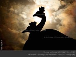 peacocks - Suriya R.N.