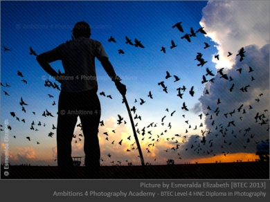 The Gaurd and the birds - Esmeralda Elizabeth