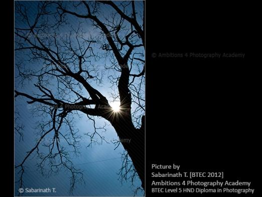 Web of life - Sabarinath T.